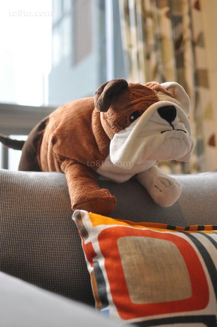 小户型客厅沙发流氓狗,可爱极致